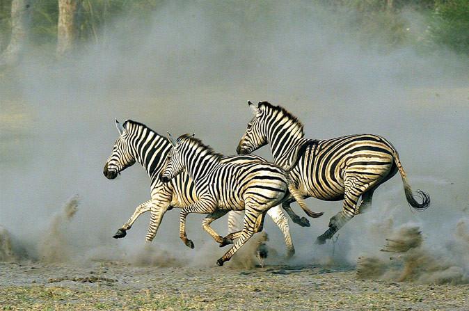 Hwange, Zimbabwe's flagship National park