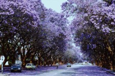 Harare, the sunshine city