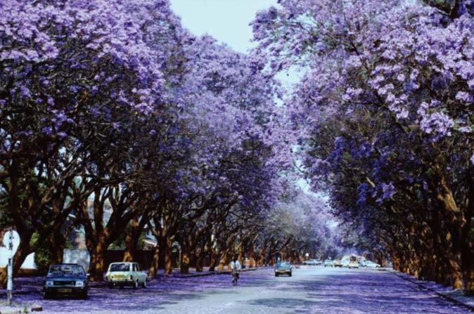 Harare, the sunshine city